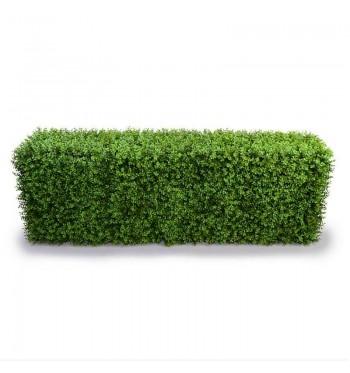 Rectangular Boxwood Hedge