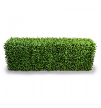 Rectangular Boxwood Hedge