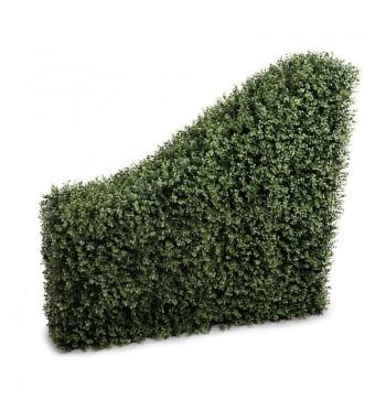Transitional Boxwood Hedge